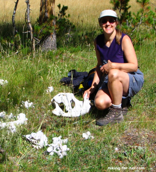 Female hiker kneeling next to bison bones in Yellowstone National Park