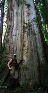 Huge cedar tree with female hiker standing at its base for scale