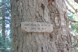 Hiking trail sign on a huge evergreen tree trunk