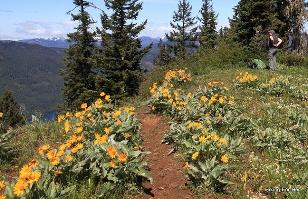 Balsamroot Alpine Flowers