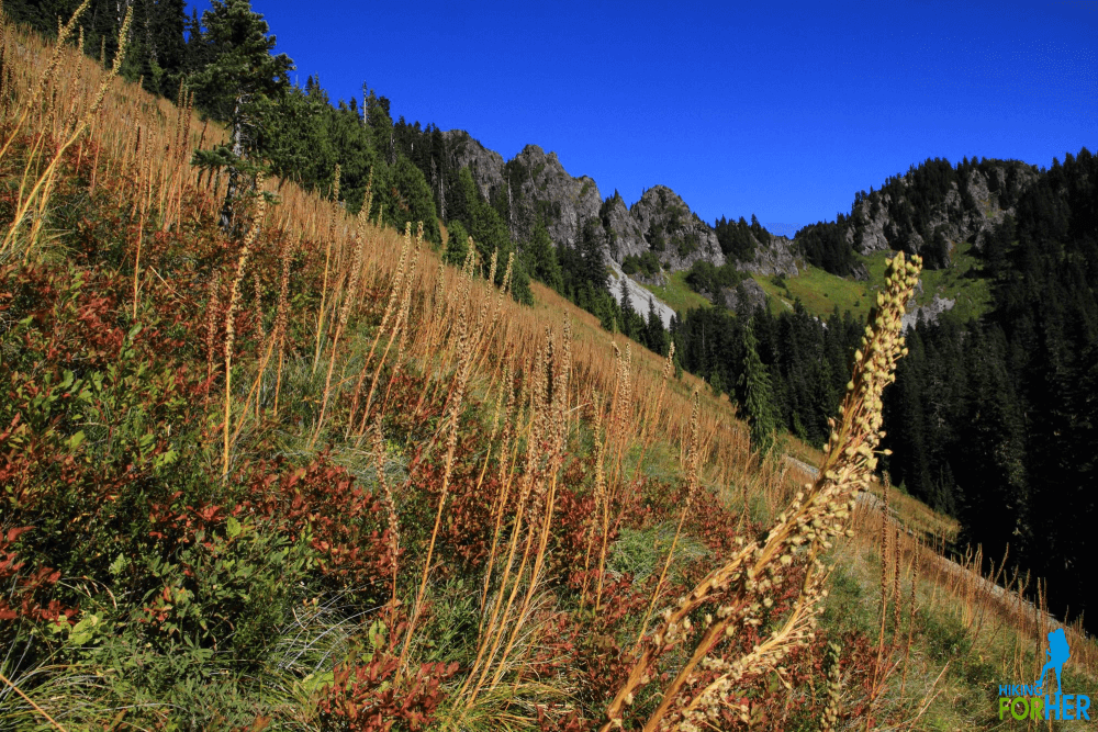 Bear grass in the meadows just below Eagle Peak Saddle at Mount Rainier National Park