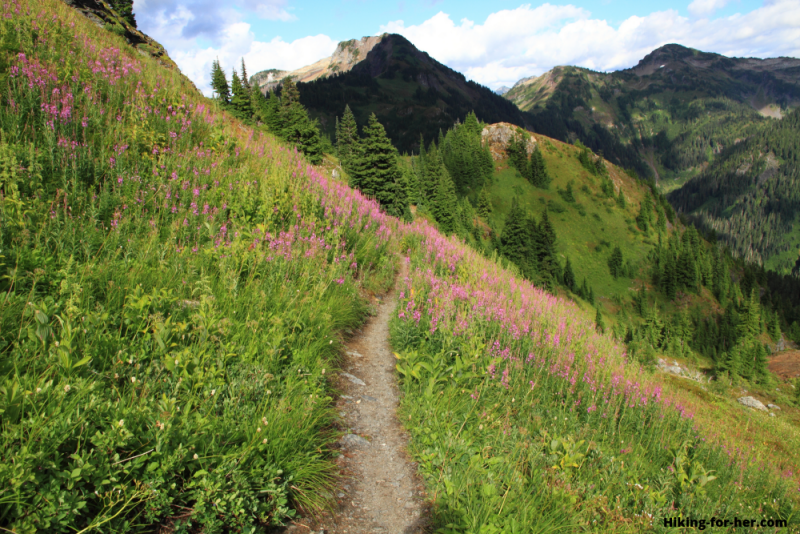 Mountain hiking trail through fireweed with peaks in the distance