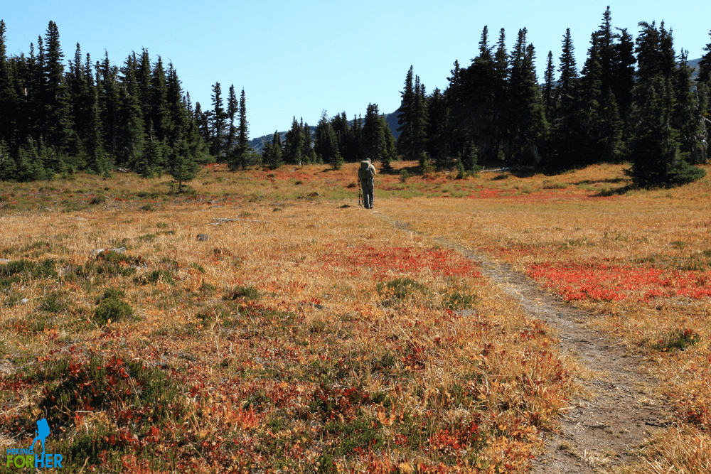 Hiker on a fall trail bursting with colorful ground cover in Spray Park, Mount Rainier