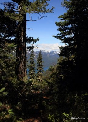 Blue skies and snow capped mountains viewed from a forested hiking trail