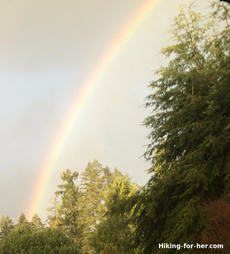 Rainbow and trees in a grey sky