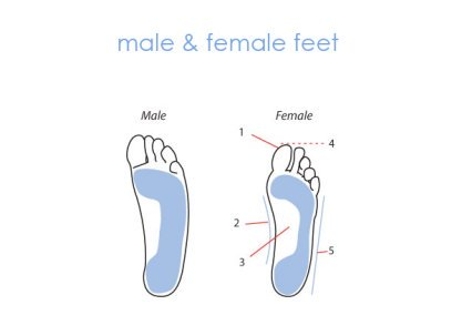 Diagram comparing male and female foot