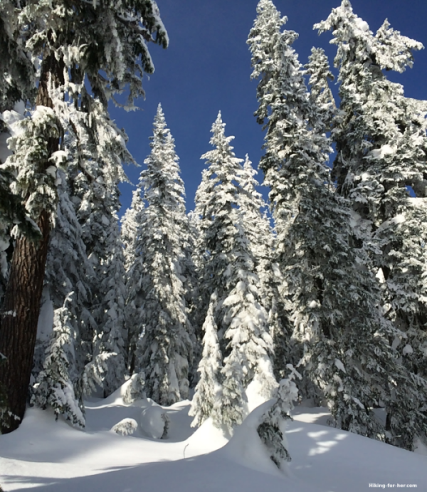 Snowshoeing destination: trees encased in ice fog crystals in a pristine backcountry meadow