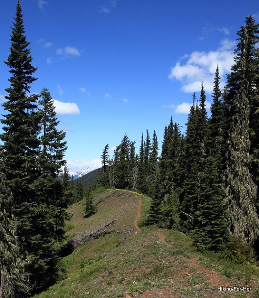 A serene ridge top trail under blue skies for a hiker to enjoy
