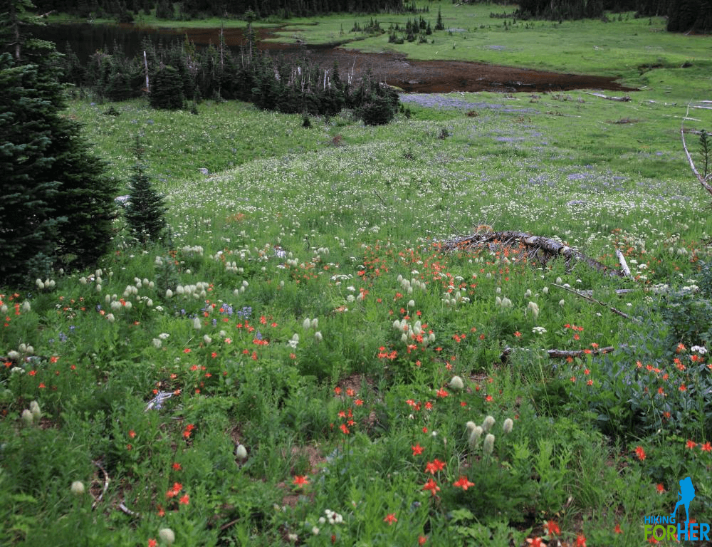 Alpine flower meadow with shallow lake in background