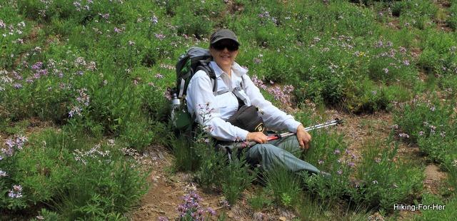 Woman hiker in mountain meadow of purple asters