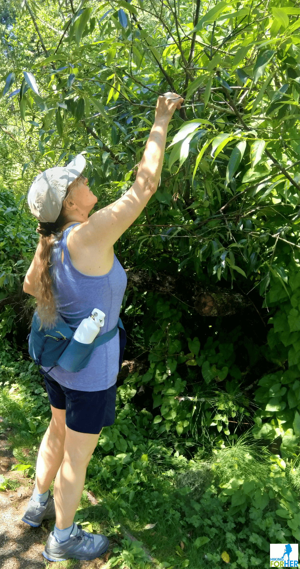 Female hiker reaching up into a leafy branch, wearing shorts and tank top plus a fanny pack with water bottle