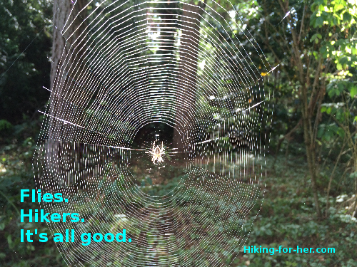 Spiderweb stretched across trail