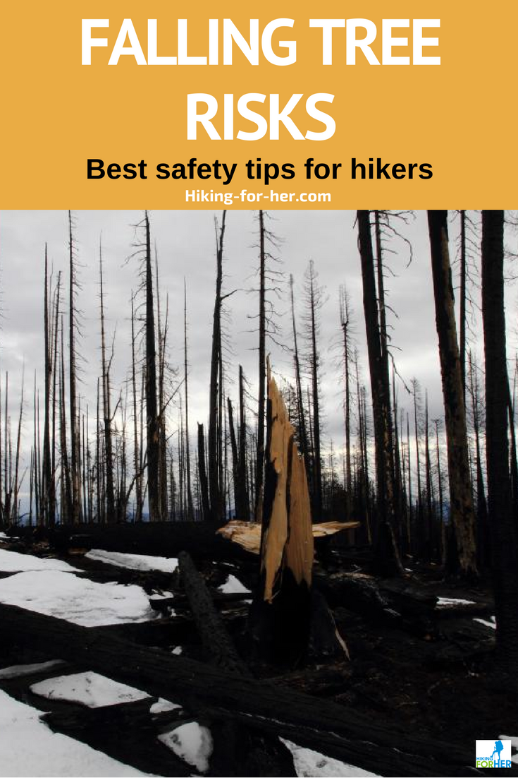 Hiking can be risky, but these safety tips from Hiking For Her can prevent falling tree risks on the trail. #hiking #backpacking #outdoorsafety #hikingtips #safehiking