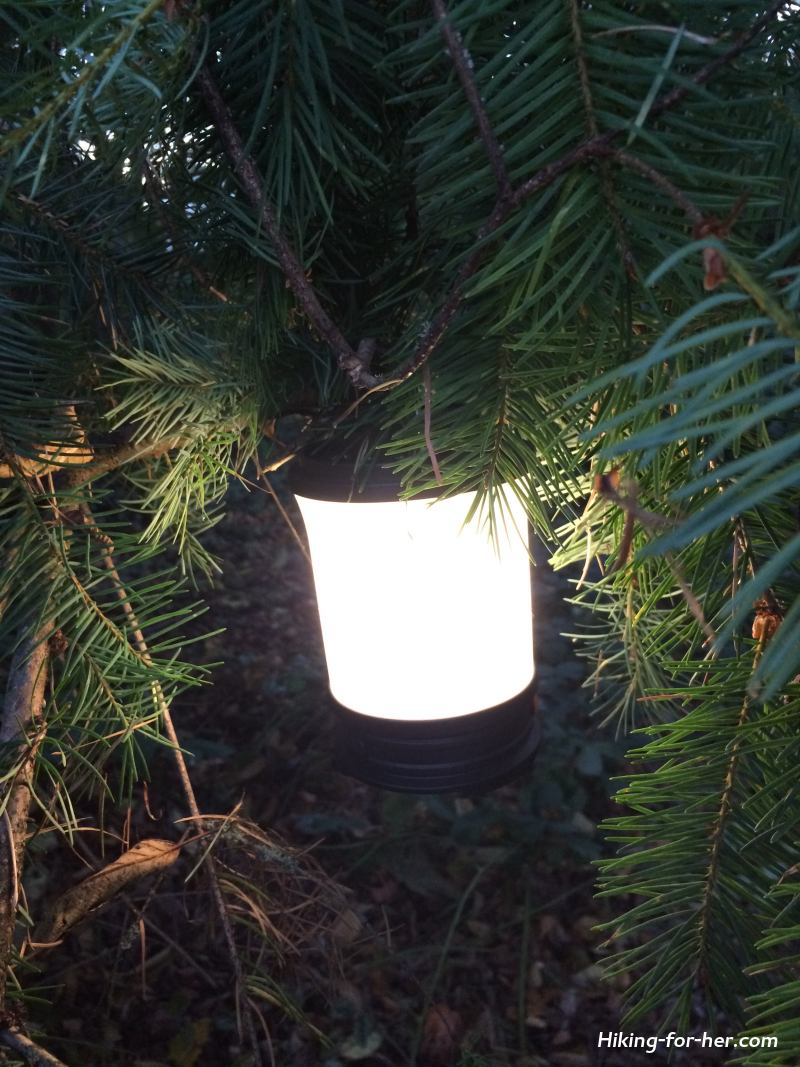 Glowing camping lantern hanging in a fir tree