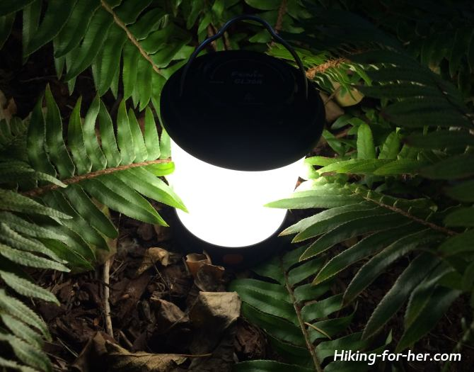 Glowing camp lantern surrounded by ferns