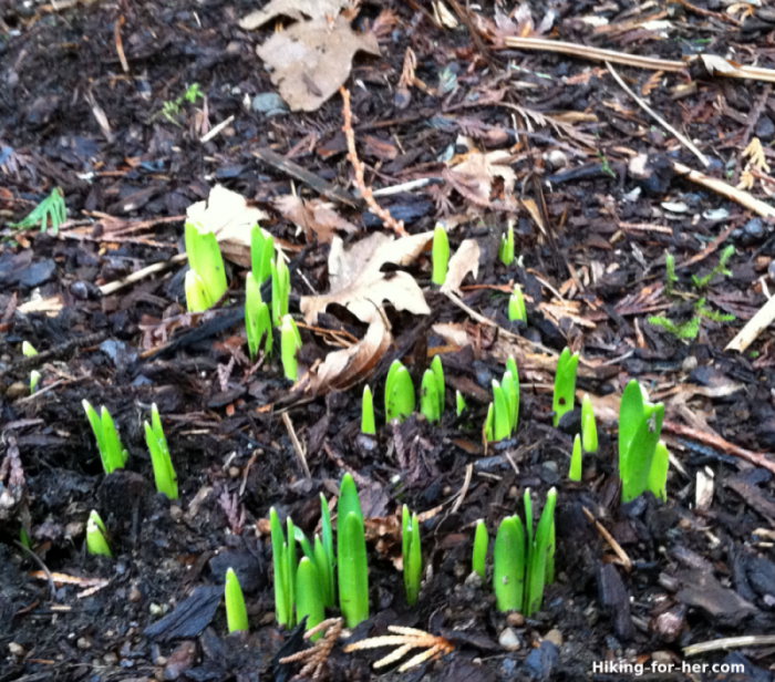 Fresh green shoots of springtime plants