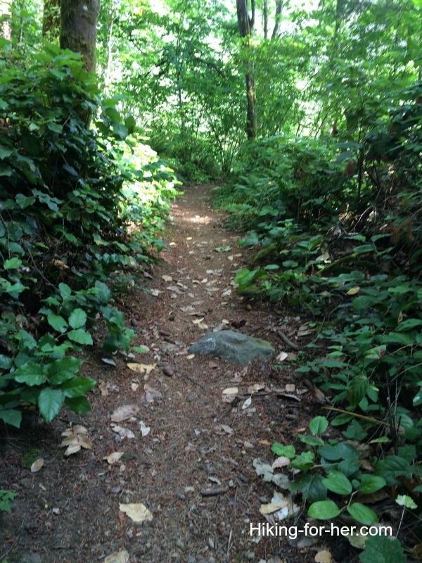 Hiking trail through cool, lush forest
