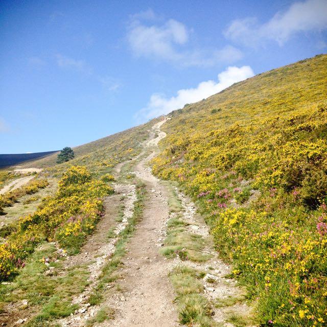 Uphill track on Camino