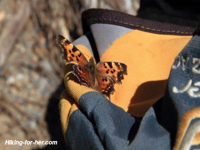 Orange butterfly on yellow backpack