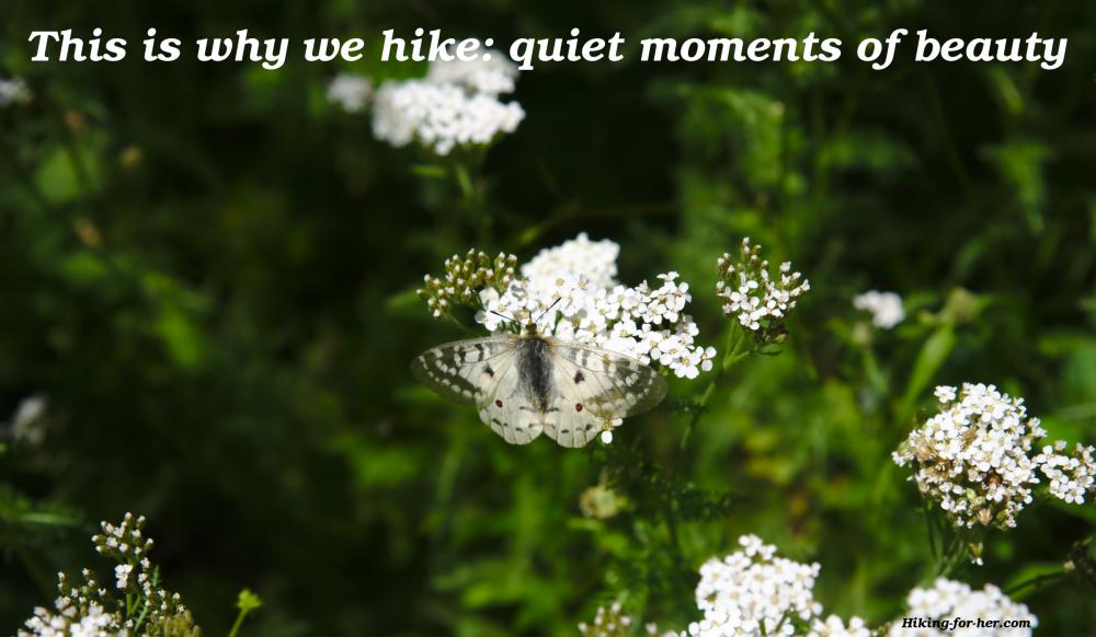 White butterfly on alpine wild flower