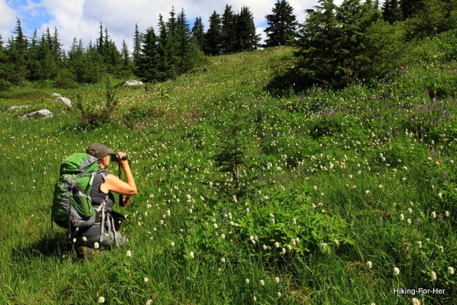 Female hiker kneeling, wearing a green backpack while photographing wild flowers in a mountain meadow, Cascade Mountains, Washington State USA