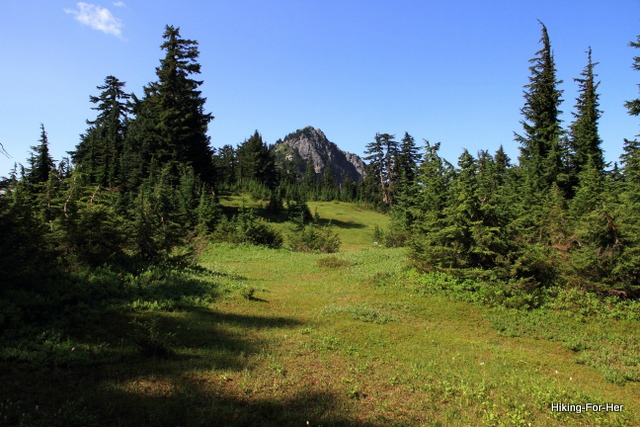 Lush green mountain meadow ringed by fir trees