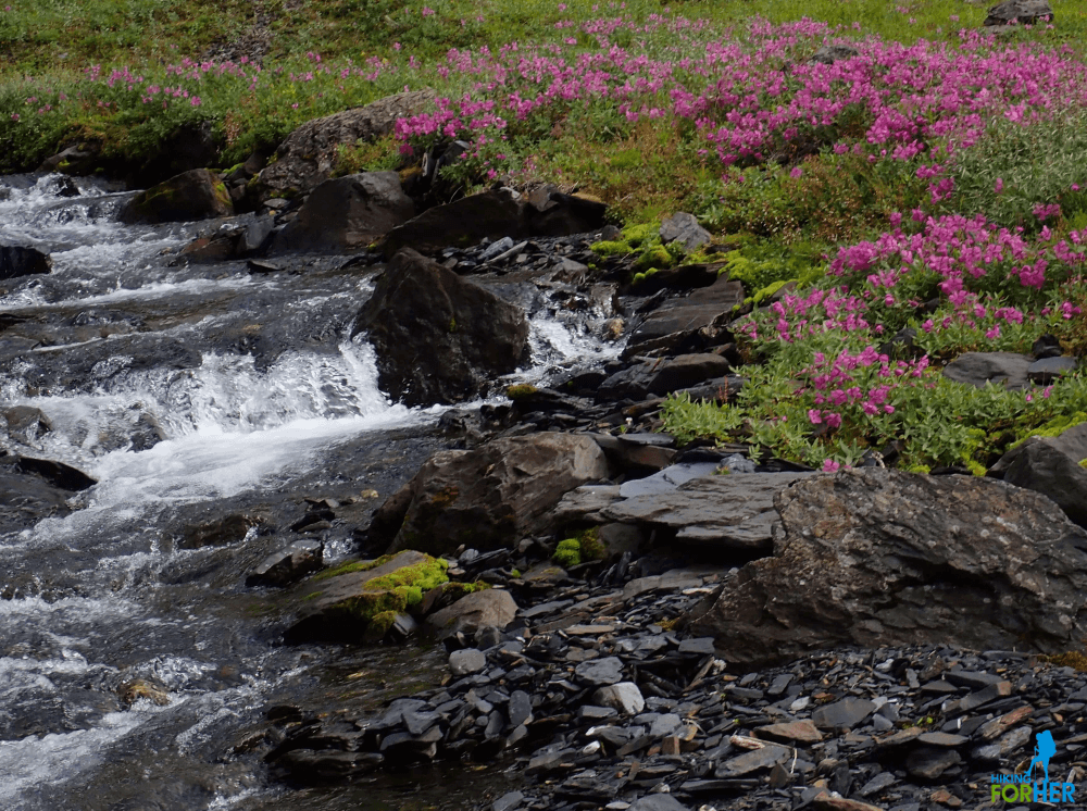 Rocky creek surrounded by purple fireweed blossoms