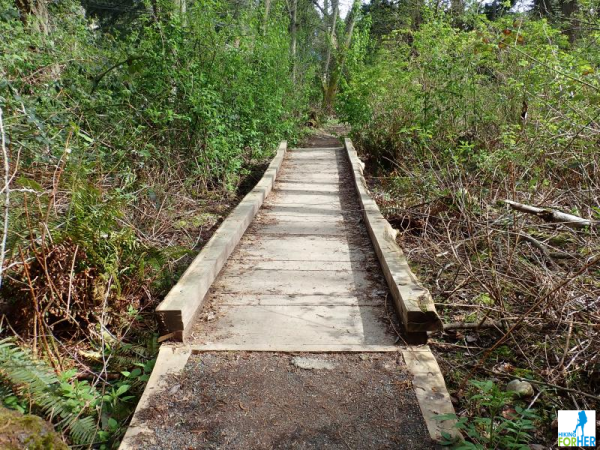 Wooden foot bridge over swampy hiking trail with bright green spring vegetation on both sides