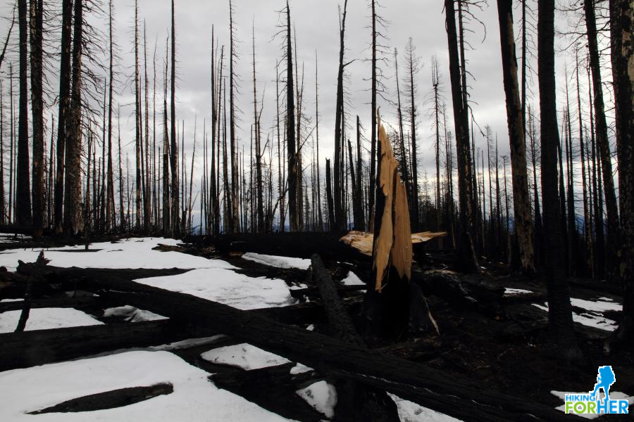 Burned trees fallen across a hiking trail