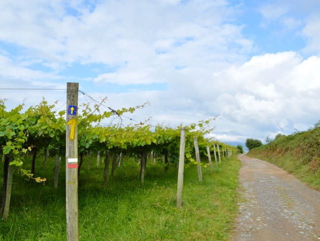 Camino Way alongside vineyard