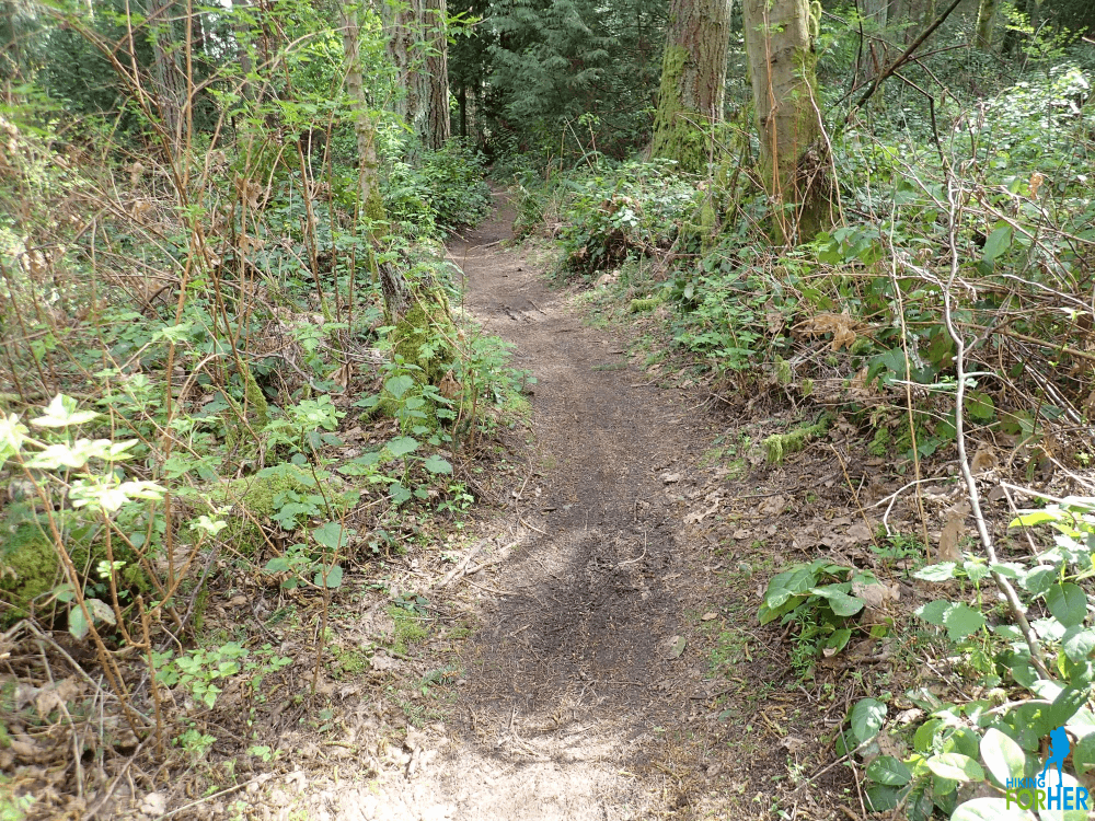 Dirt hiking trail with green foliage and trees on either side