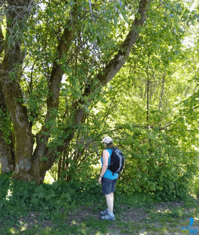 Female hiker with backpack on trail against a backdrop of bushes and large trees