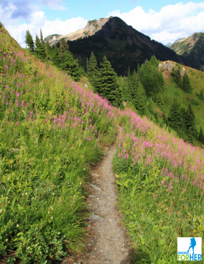 Mountain hiking trail with bright purple fireweed on both sides